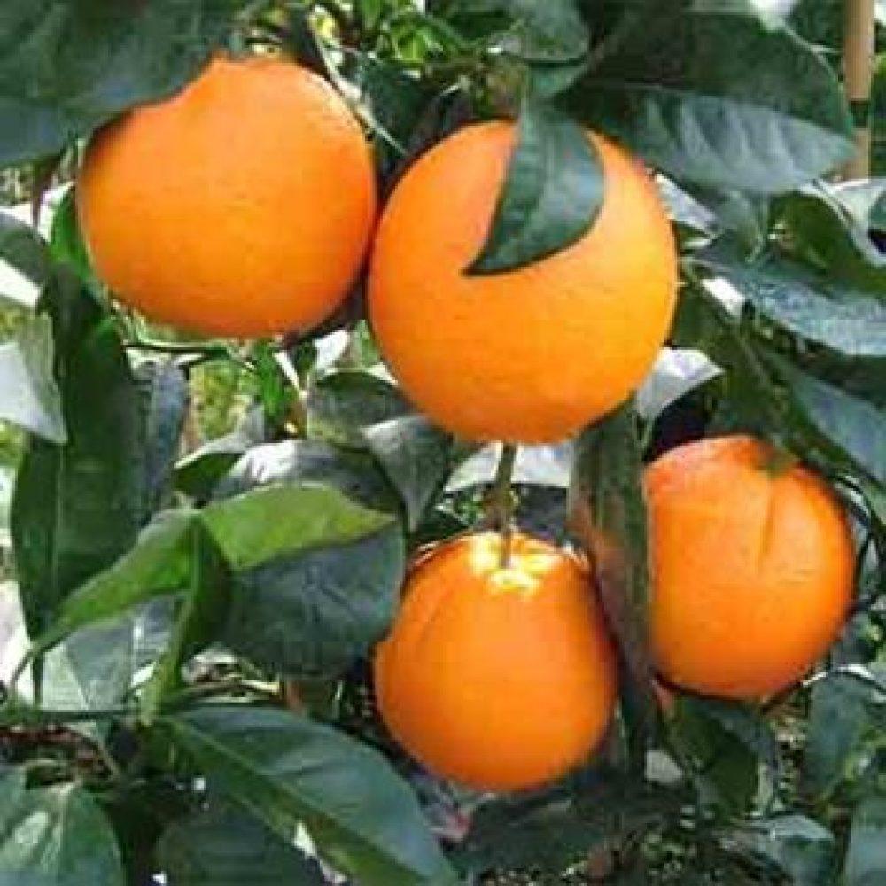 OrangeFukumoto1-1.jpg